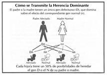 Autosómica dominante: En este modo de herencia, el genSED es dominante, esto quiere decir, que al tener una de las copiasmutados, la copia normal no puede realizar su función